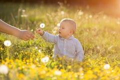 La mano adulta sostiene el diente de león del bebé en el niño de la puesta del sol que se sienta en un meado Foto de archivo libre de regalías