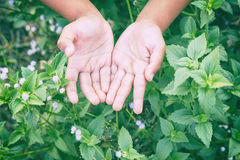 la mano alta vicina molle della sfuocatura e del fuoco del bambino con la natura fiorisce, Immagini Stock Libere da Diritti