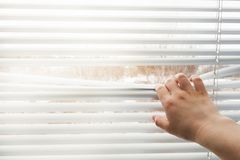 La mano apre i ciechi di finestra Copi lo spazio fotografia stock