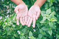 la mano ascendente cercana suave del foco y de la falta de definición del niño con la naturaleza florece, Imágenes de archivo libres de regalías