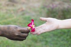 La mano ascendente cercana sucia de hombre da un rojo a la mujer, diseño retro de la tarjeta de felicitación del día de San Valen imagenes de archivo