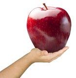 La mano che tiene l'insetto brillante Apple rosso ha isolato Immagini Stock Libere da Diritti