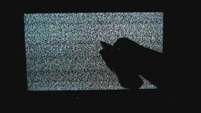 La mano commuta i canali di stile di vita nessun fondo di rumore TV dell'uomo Schermo della televisione con rumore statico causat video d archivio