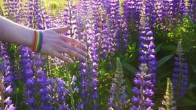 La mano con la pulsera de LGBT en la puesta del sol toca las flores florecientes, concepto, cierre para arriba metrajes