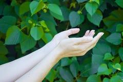 La mano de la chica joven en verde hojea fondo fotos de archivo