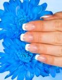 La mano de la mujer con la manicura francesa perfecta Imagen de archivo libre de regalías