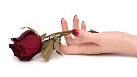La mano de la mujer con se levantó Fotos de archivo libres de regalías