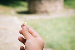 La mano de la mujer sostiene una margarita imágenes de archivo libres de regalías