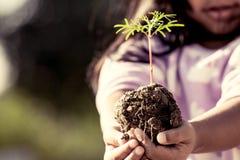 La mano de la niña que sostiene el árbol joven para prepara la planta en la tierra foto de archivo libre de regalías
