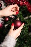 La mano de la muchacha pone la decoración roja de la Navidad en el árbol de navidad Fotografía de archivo