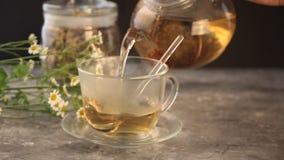 La mano de la mujer que vierte en un té de manzanilla médico herbario de las flores de la taza de cristal Naturopathy Chamomilla  metrajes