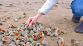 La mano de la mujer toma la c?scara de rapan en la playa del arena de mar metrajes