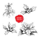 La mano de la Navidad dibujada planta la colección Bayas del acebo, poinsetia, muérdago Símbolos estacionales del invierno Decora