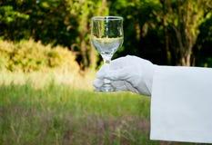 La mano de un camarero en un guante del blanco sostiene un vidrio en la naturaleza Fotografía de archivo