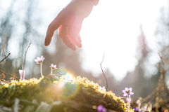 La mano de un hombre sobre una flor azul detrás se encendió por el sol imagenes de archivo