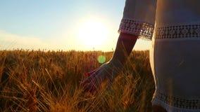 La mano de una chica joven en la cámara lenta toca las espiguillas del trigo en el campo contra la perspectiva de la puesta del s metrajes