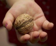La mano dei bambini che tiene una noce Fotografia Stock Libera da Diritti