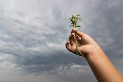 La mano dei bambini tiene un mazzo dei fiori wiled su fondo del cielo nuvoloso di estate Immagini Stock