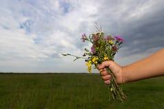 La mano dei bambini tiene un mazzo dei fiori wiled su fondo del cielo nuvoloso di estate Fotografie Stock Libere da Diritti