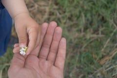 La mano del bebé da la margarita a la mamá Foto de archivo
