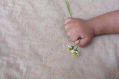 La mano del bebé que sostiene una flor Imagenes de archivo