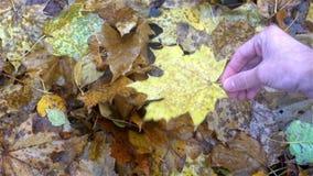 La mano del hombre joven quita la hoja amarilla de tierra del otoño almacen de video