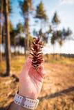 La mano del hombre que sostiene un cono del pino fotografía de archivo libre de regalías