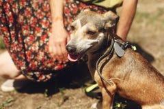 La mano del marrón de la caricia del hombre asustó el perro del refugio que presentaba afuera Fotos de archivo libres de regalías