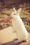 La mano del niño que alimenta un pequeño conejo Imagen de archivo