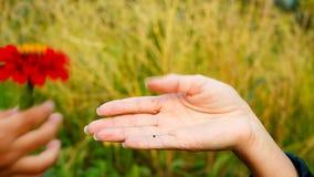 La mano del niño que da a la mano de la madre una flor metrajes
