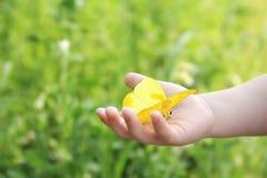 La mano del niño que sostiene la mariposa de azufre barrada naranja afuera Imágenes de archivo libres de regalías