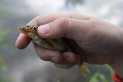 La mano del niño que sostiene un pescado imágenes de archivo libres de regalías