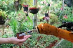 La mano del robot da el árbol en la maceta en el invernadero imagenes de archivo