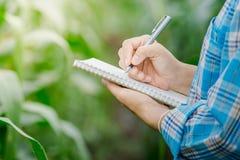 La mano del ` s della donna prende le note con una penna su un taccuino nel giardino dell'agricoltura Immagine Stock