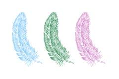 La mano del vector dibujada alinea la pluma del estilo del arte para el cartel, bandera, logotipo, icono Fije de plumas mullidas  stock de ilustración
