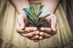 La mano della donna che tiene il giovane albero per prepara in suolo Fotografia Stock Libera da Diritti