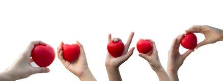 La mano della donna che tiene un cuore rosso su fondo bianco isolato immagini stock