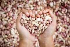 La mano della donna fa la forma del cuore che tiene l'aglio fresco Fotografie Stock Libere da Diritti