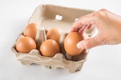 La mano della donna ha selezionato l'uovo in cartone dell'uovo su fondo bianco Fotografia Stock