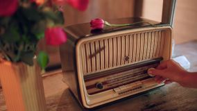 La mano delle donne include la radio Il fiore di Rosa si trova sul ricevitore d'annata e retro stock footage