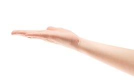 La mano di mostra o d'offerta ha isolato Fotografia Stock