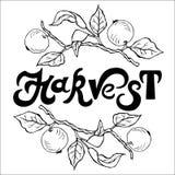 La mano dibujada poniendo letras a la cosecha con las ramas de la manzana enrruella Imagen de archivo