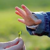 La mano e la foglia dei bambini Fotografia Stock