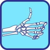 La mano esquelética tiene gusto  Fotografía de archivo libre de regalías
