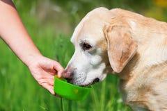 La mano femenina da un agua del perro a la bebida foto de archivo libre de regalías