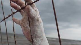 La mano femenina del artista del funcionamiento cubierta en la pintura blanca ase las barras de metal metrajes