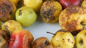 La mano femenina toma una manzana putrefacta, estropeada, madurada y pone una manzana roja grande madura fresca almacen de video