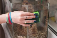 La mano femminile lava l'acquario con una spugna, fotografia stock libera da diritti