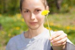 La mano femminile tiene un fiore del dente di leone Fotografia Stock Libera da Diritti