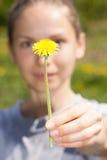 La mano femminile tiene un fiore del dente di leone Fotografie Stock Libere da Diritti